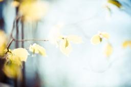 Autumn's Paradox