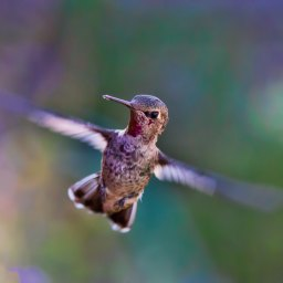 Encounters With Hummingbirds